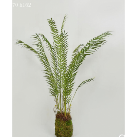 Rental artificial plant 162 cm