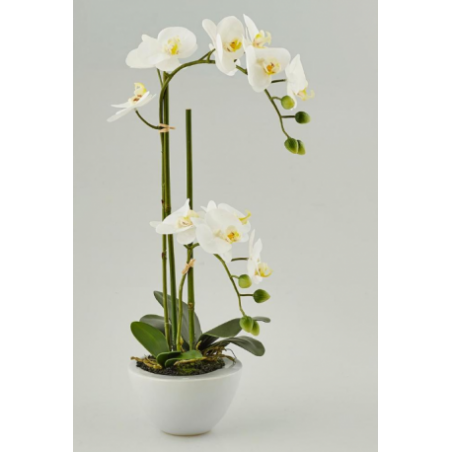Artificial orchid for rent