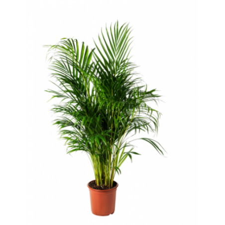Real plant rental